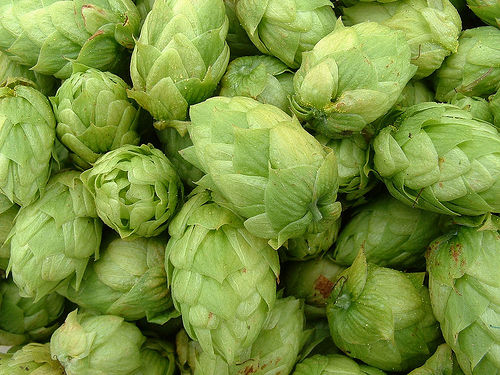 Beervana debunks report about organic hops