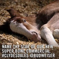 budweiser twitter clydesdale