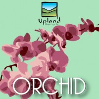 Upland Orchid label BeerPulse