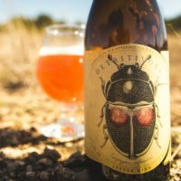 Jester King Detritivore BeerPulse