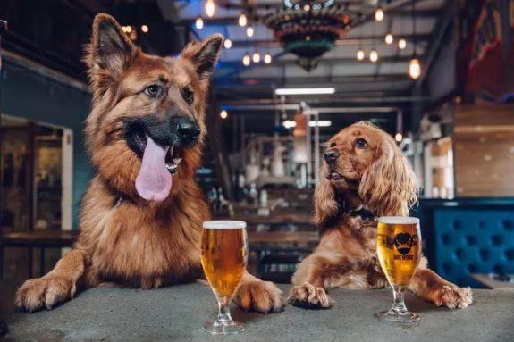 BrewDog puppies BeerPulse